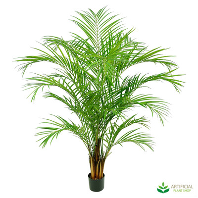 Areca Palm 1.8m (multi-trunk)