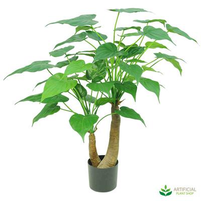 Alocasia Cacullata Tree 95cm
