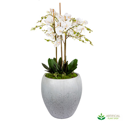 May White Orchid Arrangement 1.12m