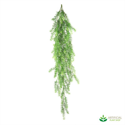 Hanging Asparagus Bush 1m (pack of 6)