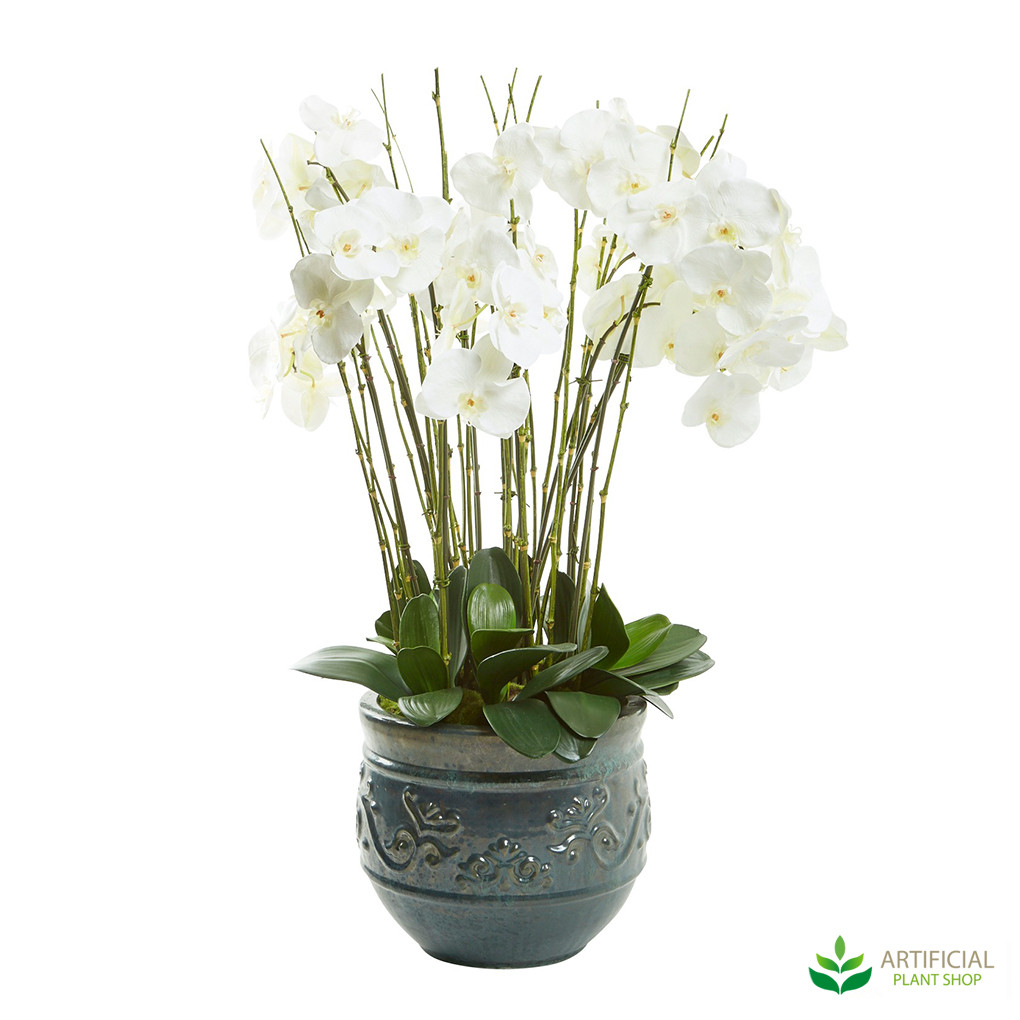 Phalaenopsis Orchid in planter