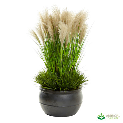 Pampas Grass in Large Black Planter 1.3m