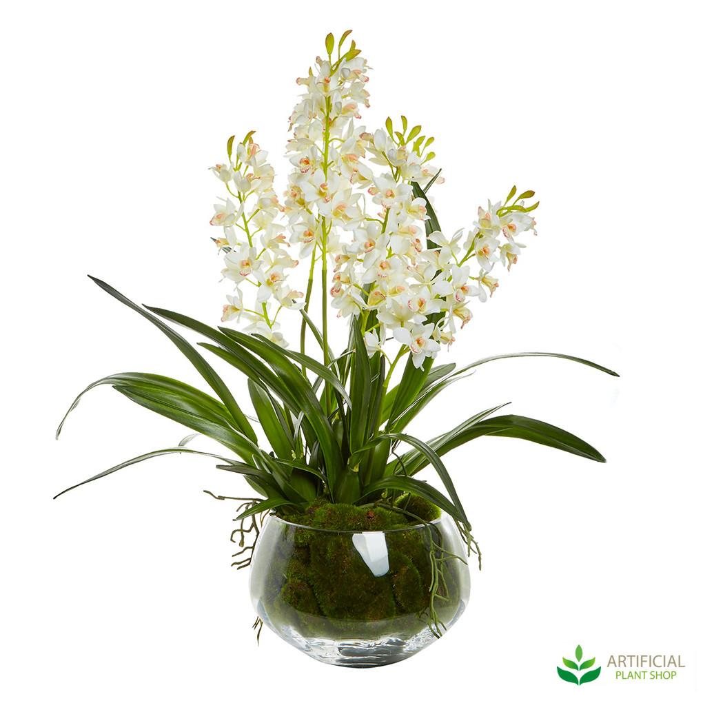 White Cymbidium Orchid