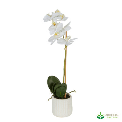 White Orchid in Ceramic Pot 50cm