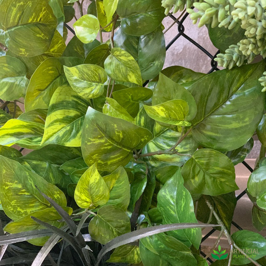 Devils ivy leaves