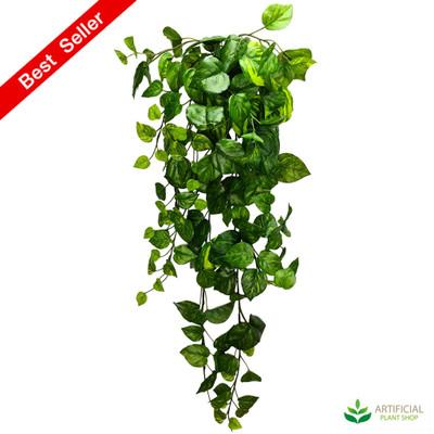 hanging Pothos devils Ivy plant