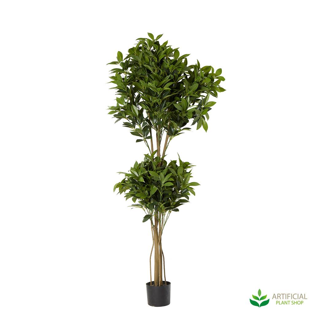 Double Topiary Tree