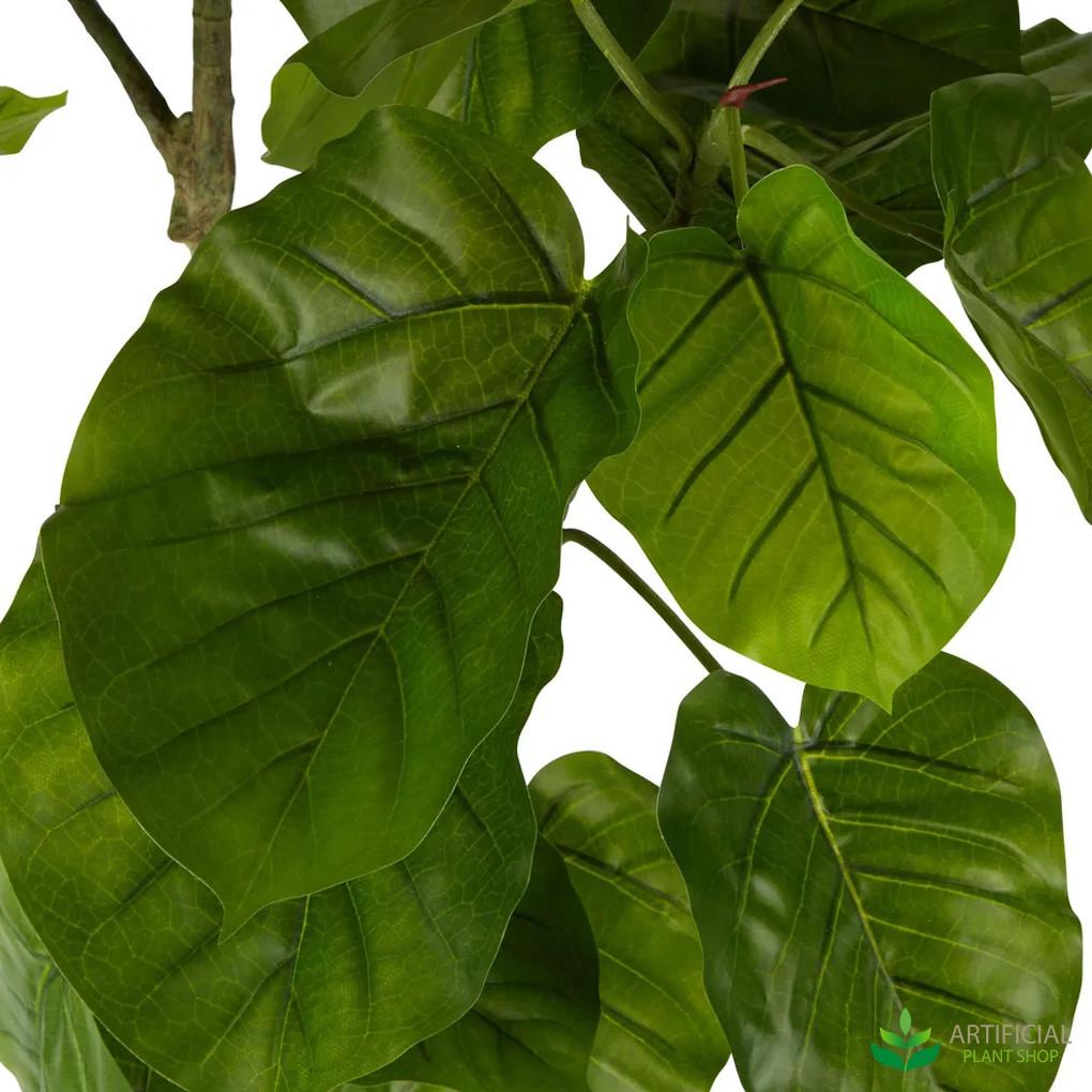Umbrella Ficus Leaves