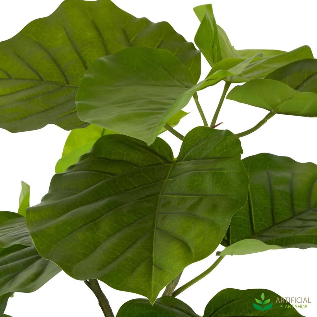 Ficus Umbrella Leaves