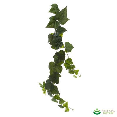 Giant Ivy Vine