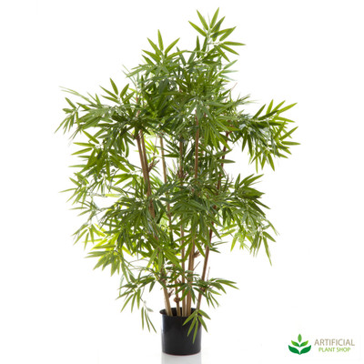 Japanese Bamboo 1m (Natural Trunks)