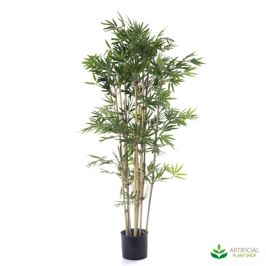 Japanese Bamboo 1.2m with natural trunks