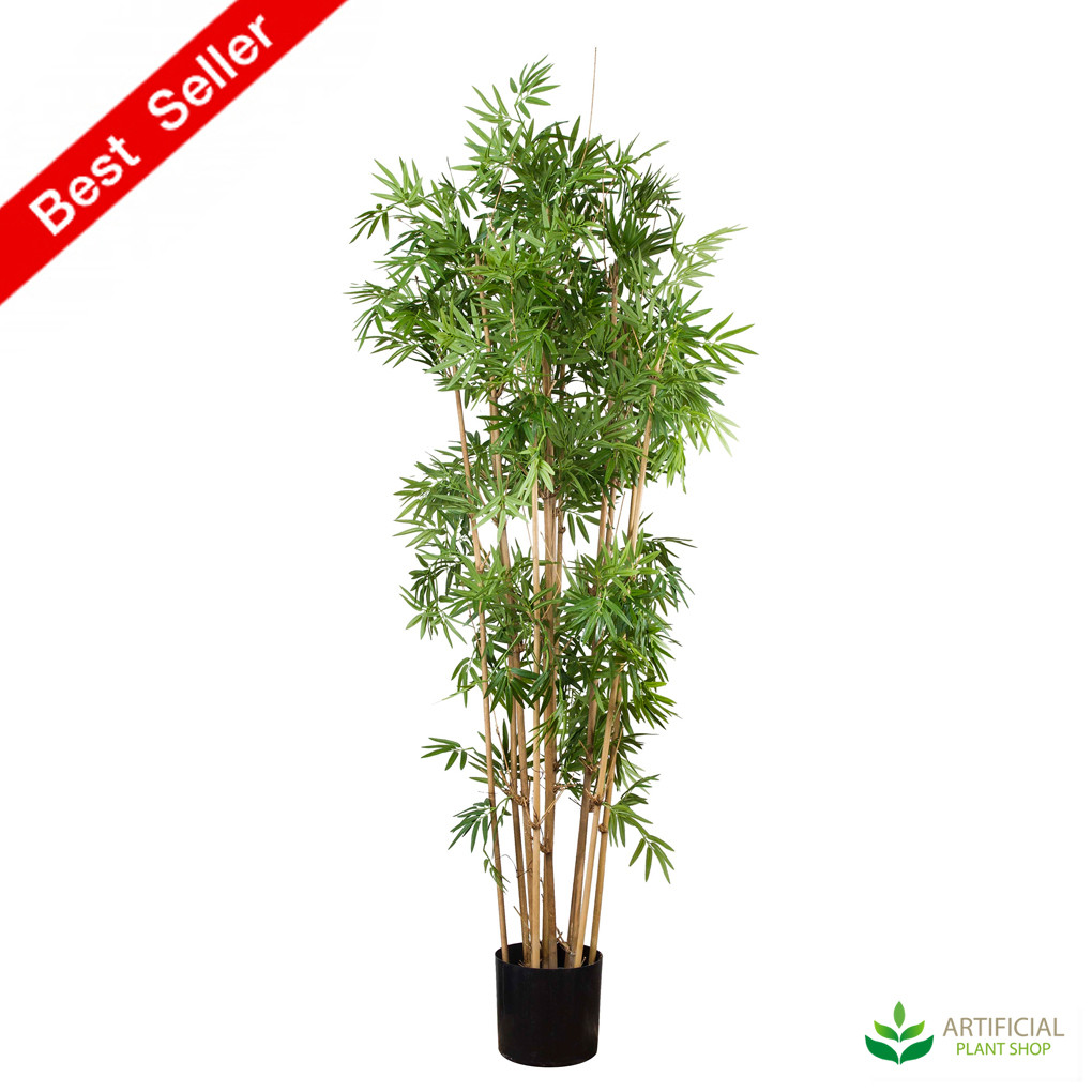 Japanese Bamboo 1.6m with natural trunks