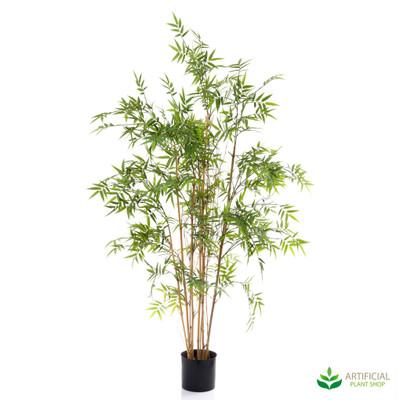 Oriental Bamboo Tree 1.6m