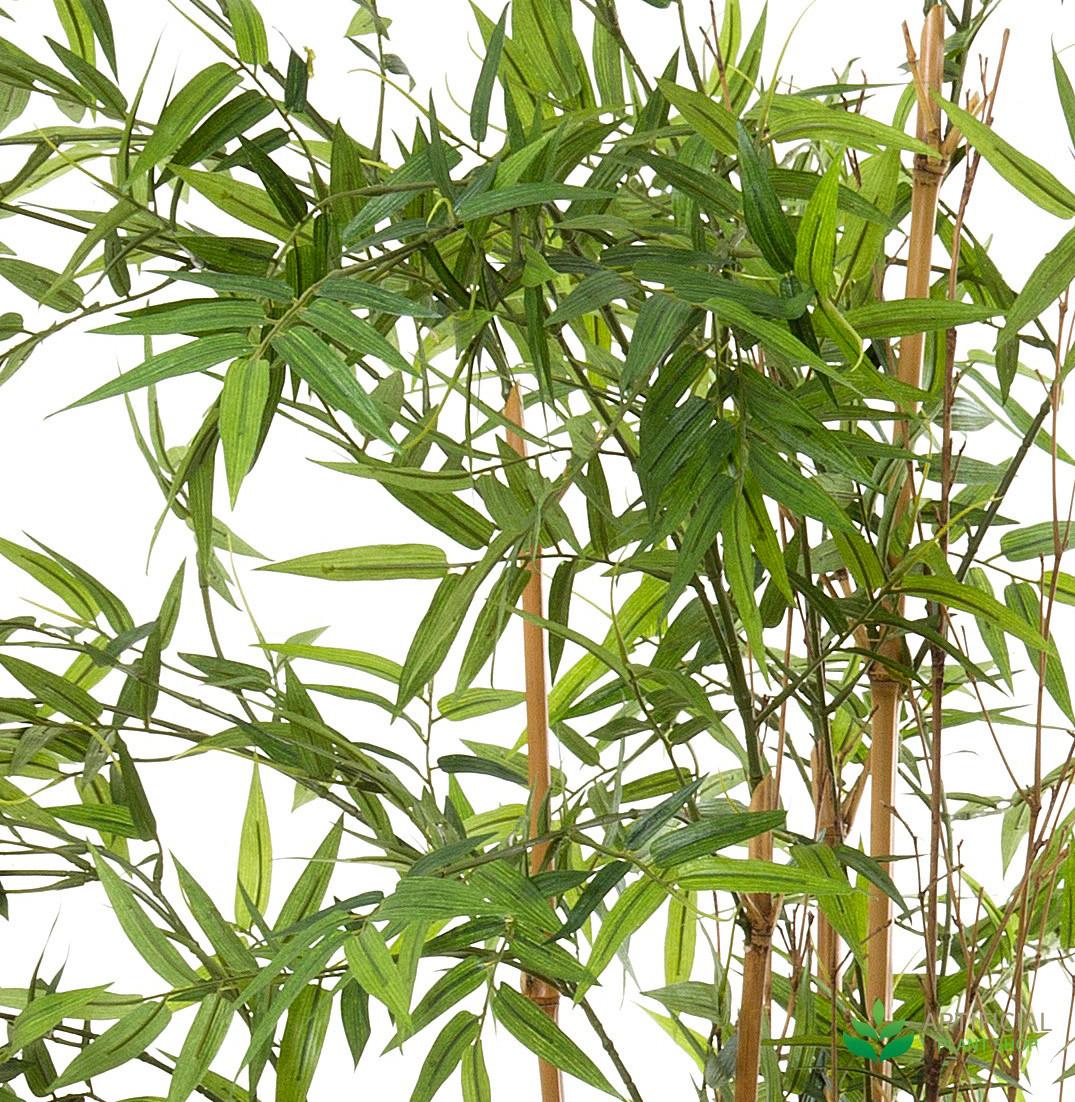Oriental Bamboo Tree leaves