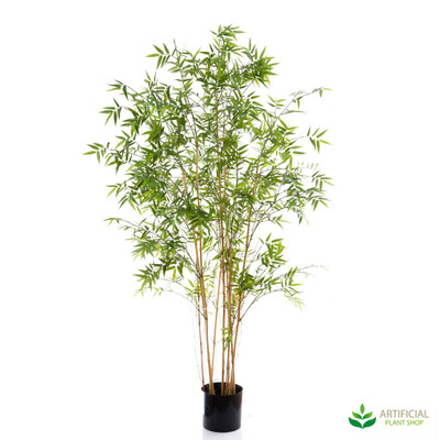 Oriental Bamboo Tree 1.9m