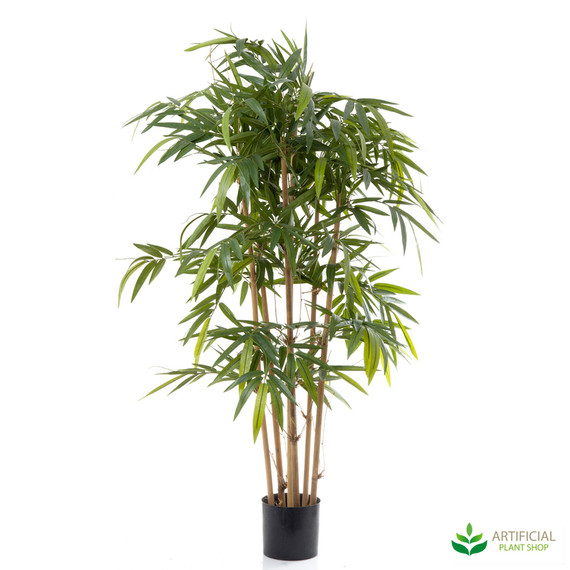 Bamboo Tree 1.5m with natural trunks