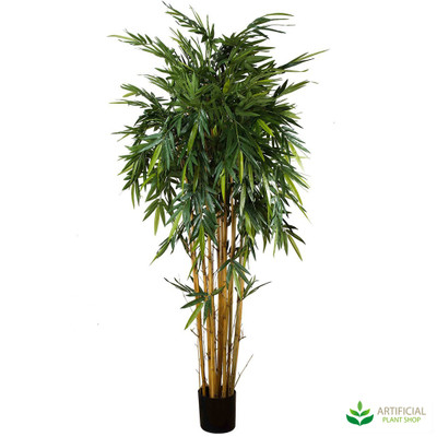 Bamboo Tree 2.2m with natural trunks