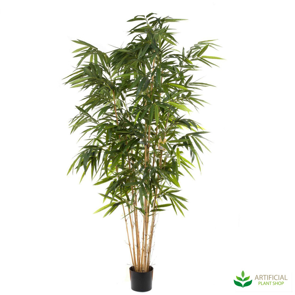 Bamboo Tree 2.4m with natural trunks