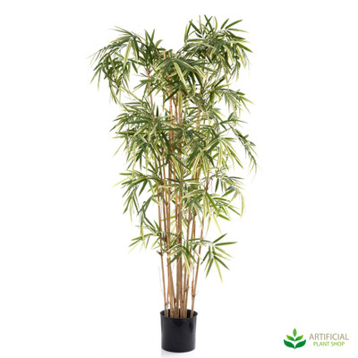 Royal Bamboo Varigated 1.7m
