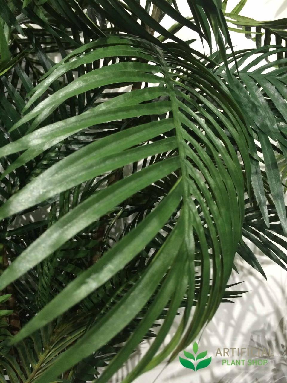 Areca Palm Tree Leaves