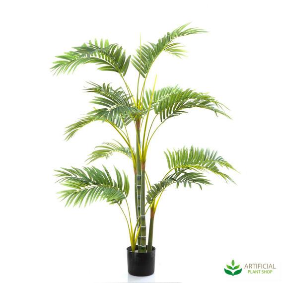 Areca Palm 1.2m
