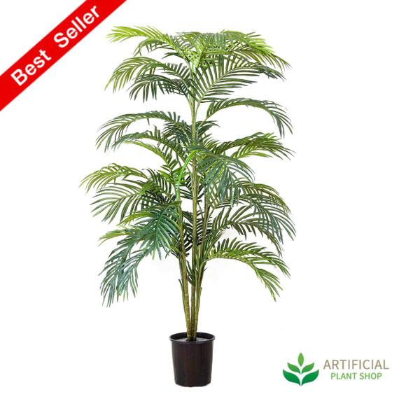 Areca Palm 1.5m with Black Pot