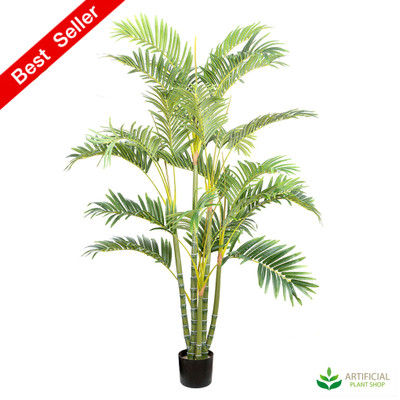Areca Palm 1.5m multi-trunk