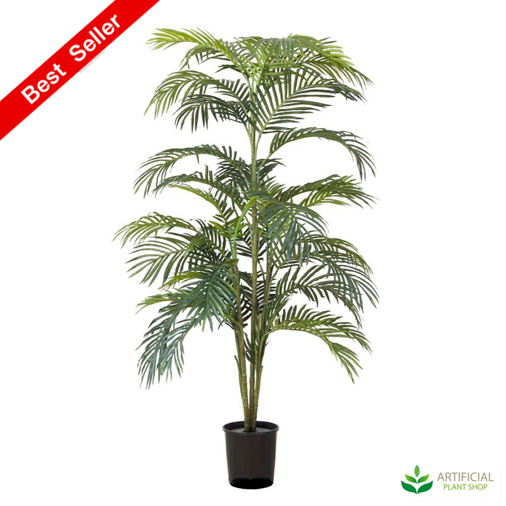 Areca Palm 1.8m with pot