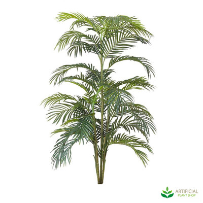 Areca Palm 1.8m without pot