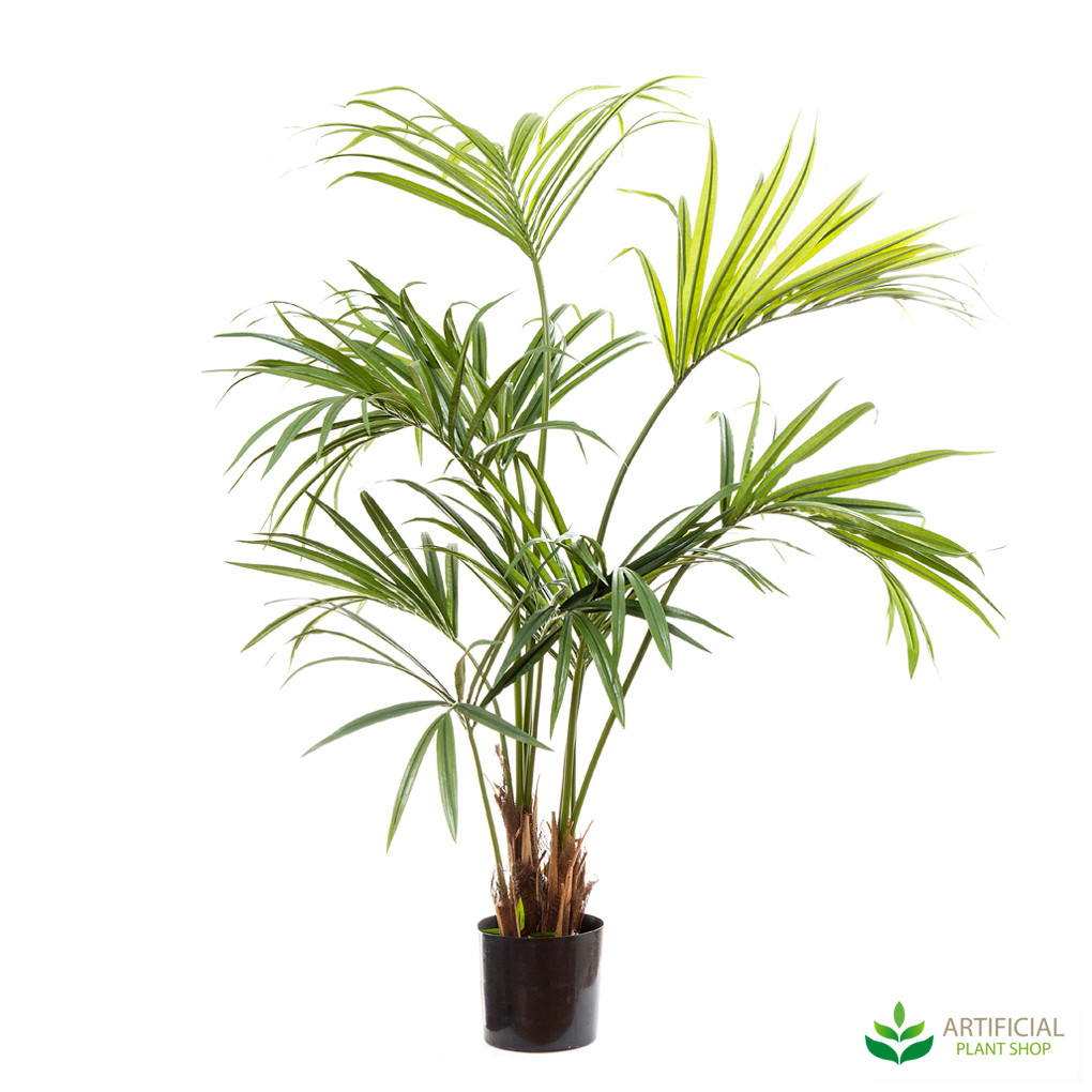 Kentia Palm 1.5m
