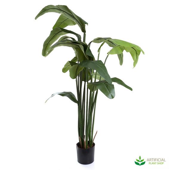Travellers Palm Tree 1.8m