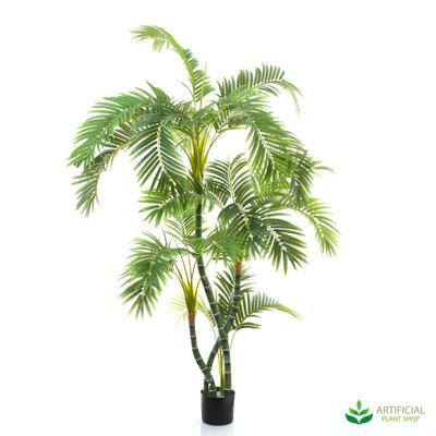 Parlour Palm 1.5m