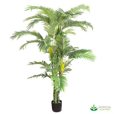 Parlour Palm 1.8m