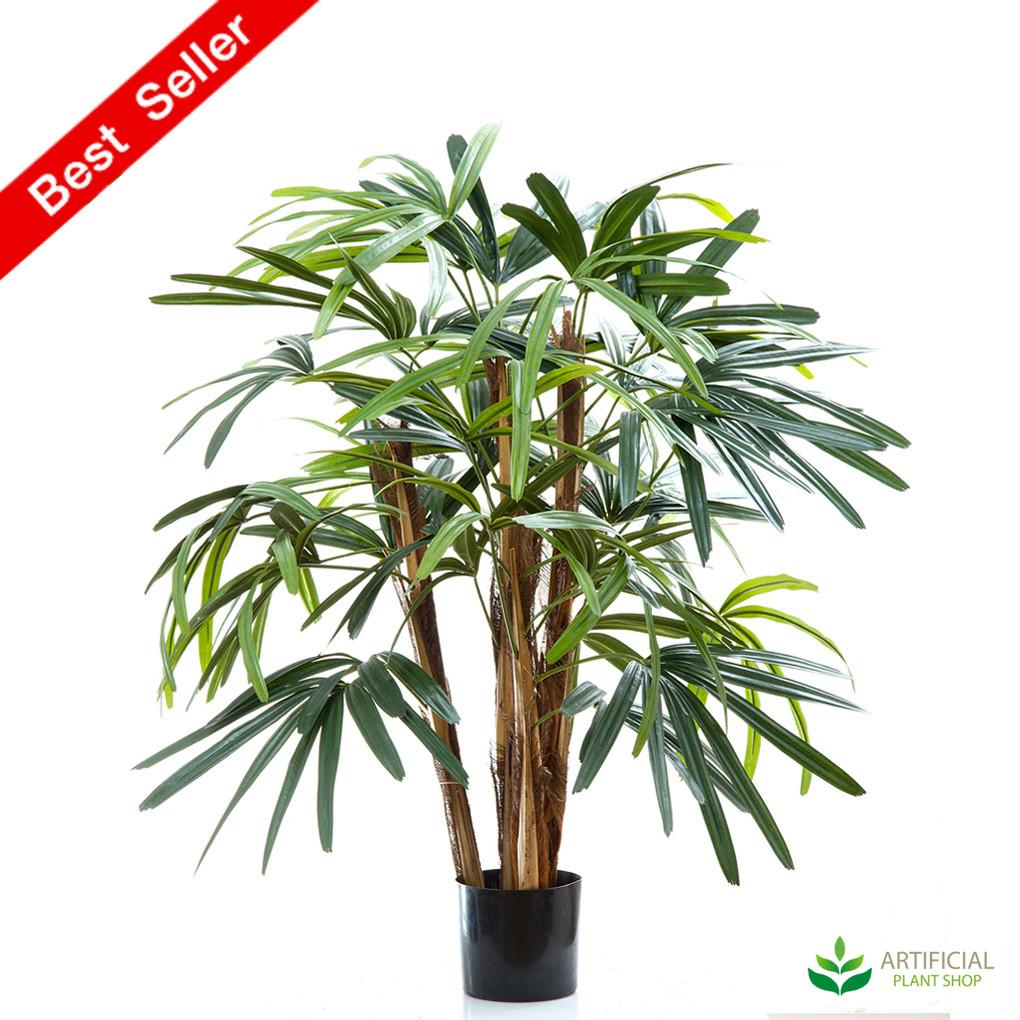 Raphis Palm 1m