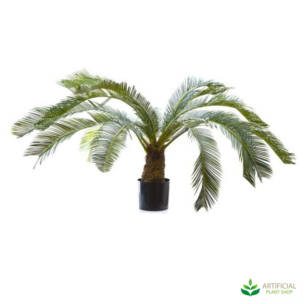 Cycus Palm 1m
