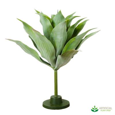 Giant Agave Plant 70cm