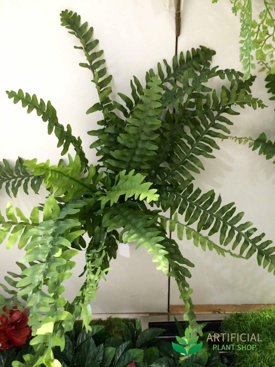 Boston Fern leaf