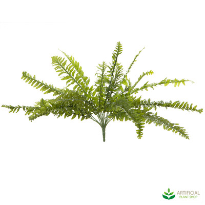 Boston Fern 48cm