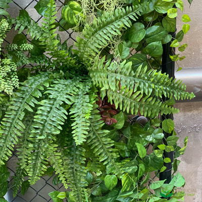 boston fern fronds