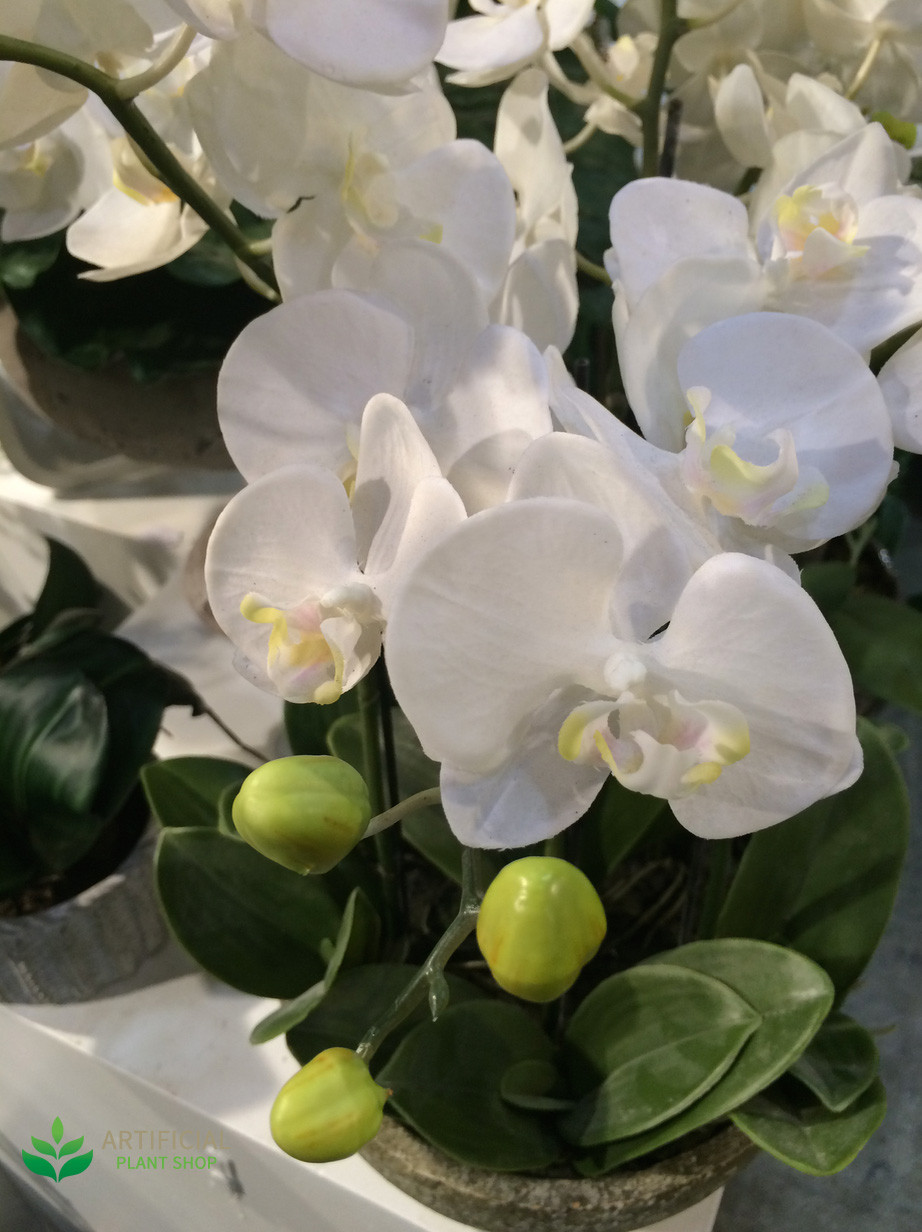 Artificial White Orchid Flwoers