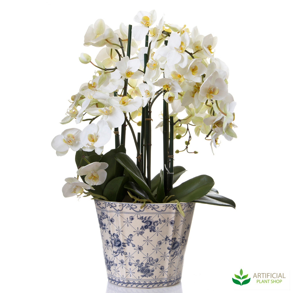 Phal Orchid 68cm in Chinese Pot