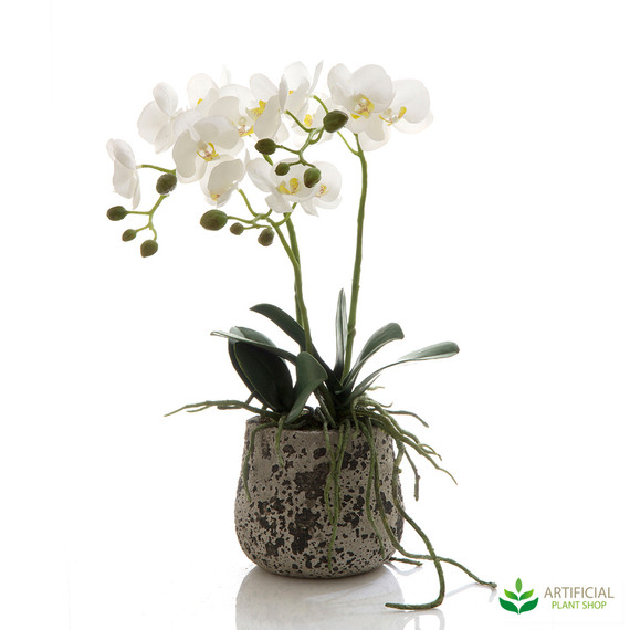 Orchid in Ceramic Pot 45cm