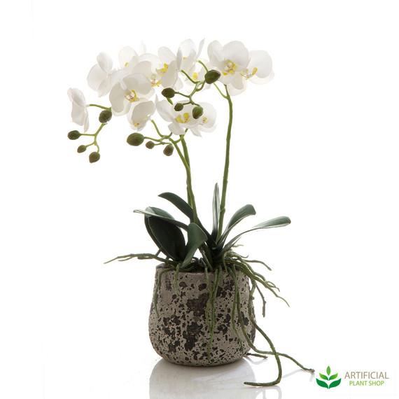 Orchid in Ceramic Pot 45cm