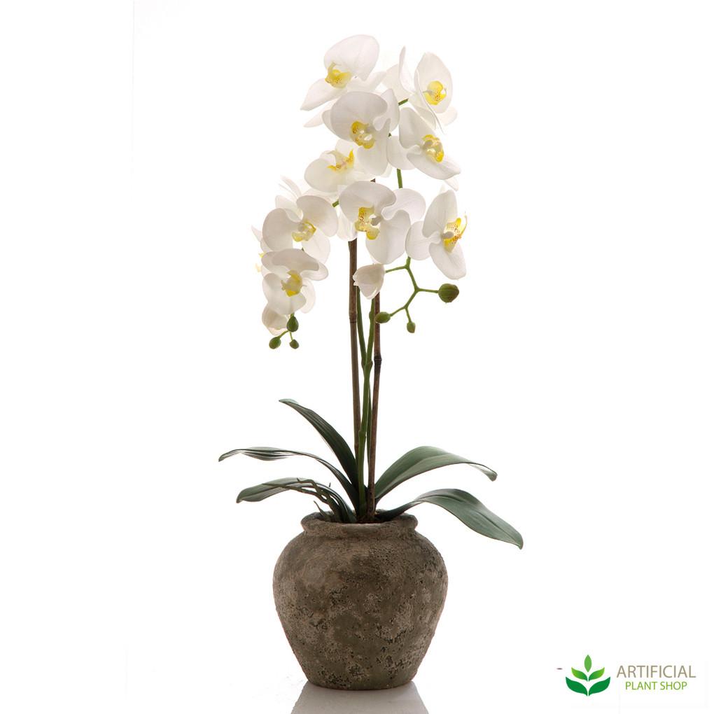 Orchid in Ceramic Pot 75cm