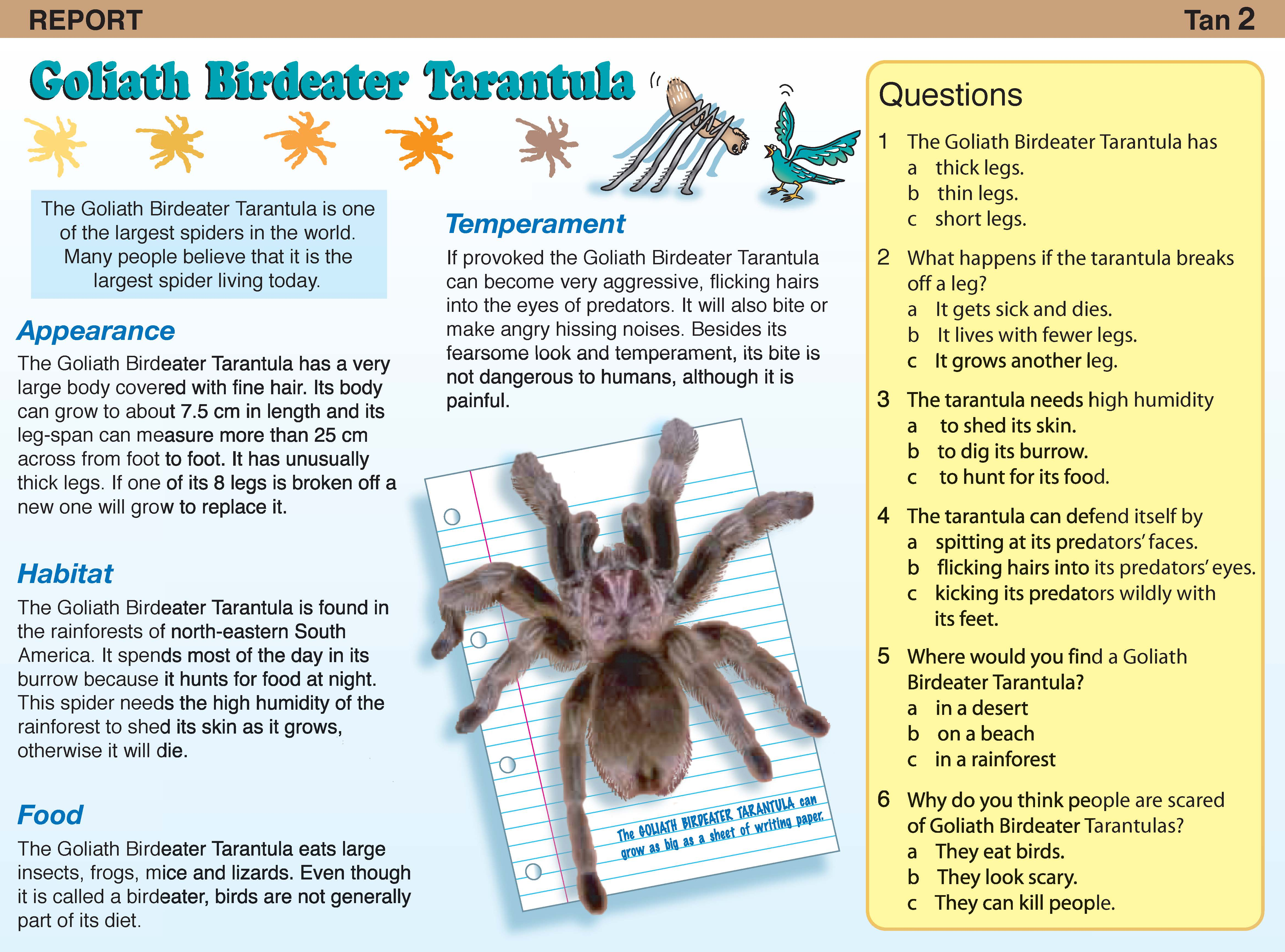 Reading Box Blue - Teachers 4 Teachers Publications Pty Ltd
