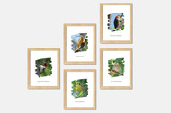 Nature Art Prints - Michigan Nature (5 printable/digital designs)