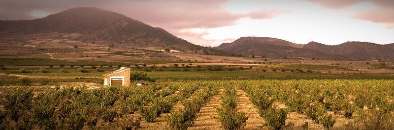 daniel-alba-vineyard-2.jpg