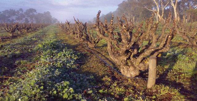teusner-old-vines.jpg
