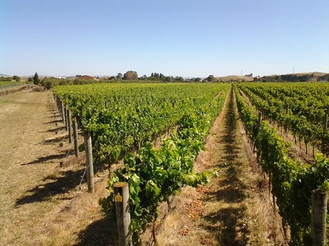 unison-vines.jpg